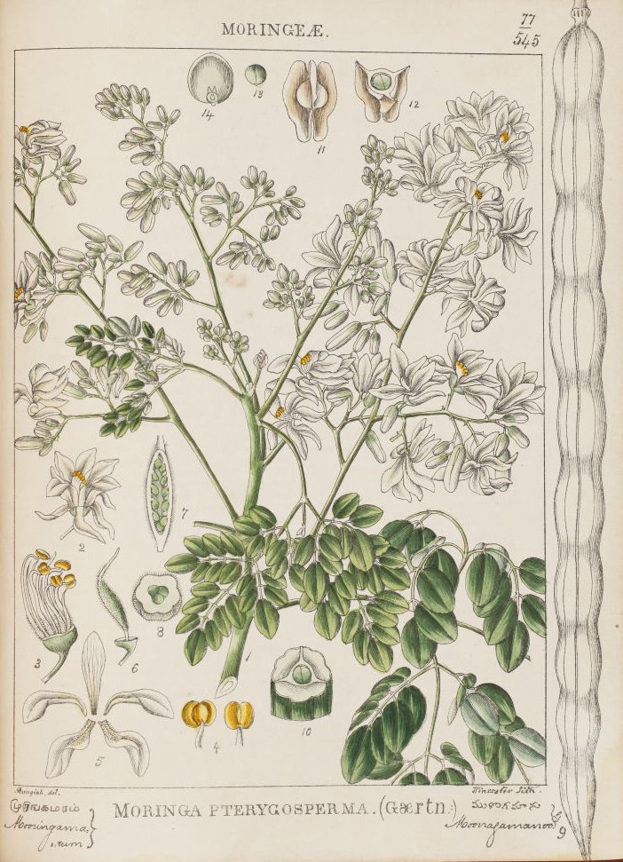 Anatomy Of A Flower – Exquisite 19th-Century Botanicals by Indian Artists - Botanicals, Colonial, Flowers, Flowers for Spring, Poetry & Nature, rare books