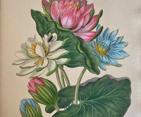 Flowers for Spring - Flowers, Flowers for Spring, Spring