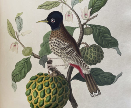 The Art & Science of Indian Botanicals - Poetry & Nature