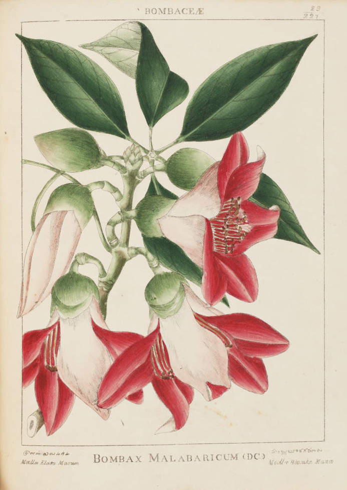 The Art & Science of Indian Botanicals - Botanicals, Flowers, Flowers for Spring, Poetry & Nature