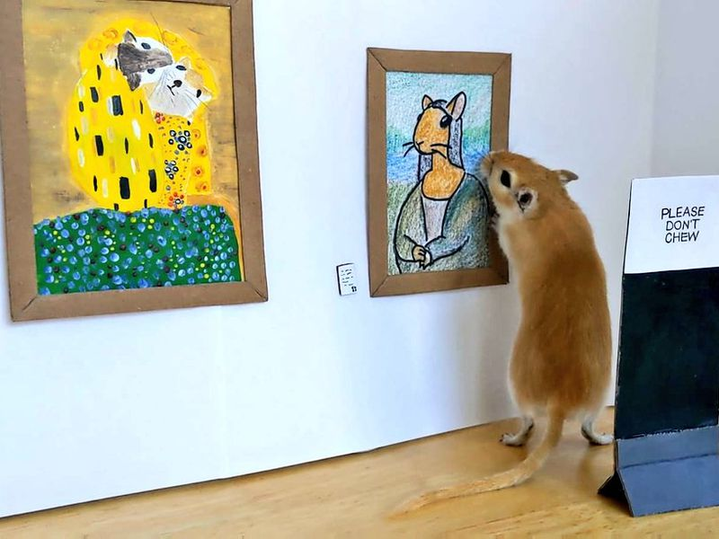 Gallery for Gerbils - Modern Art