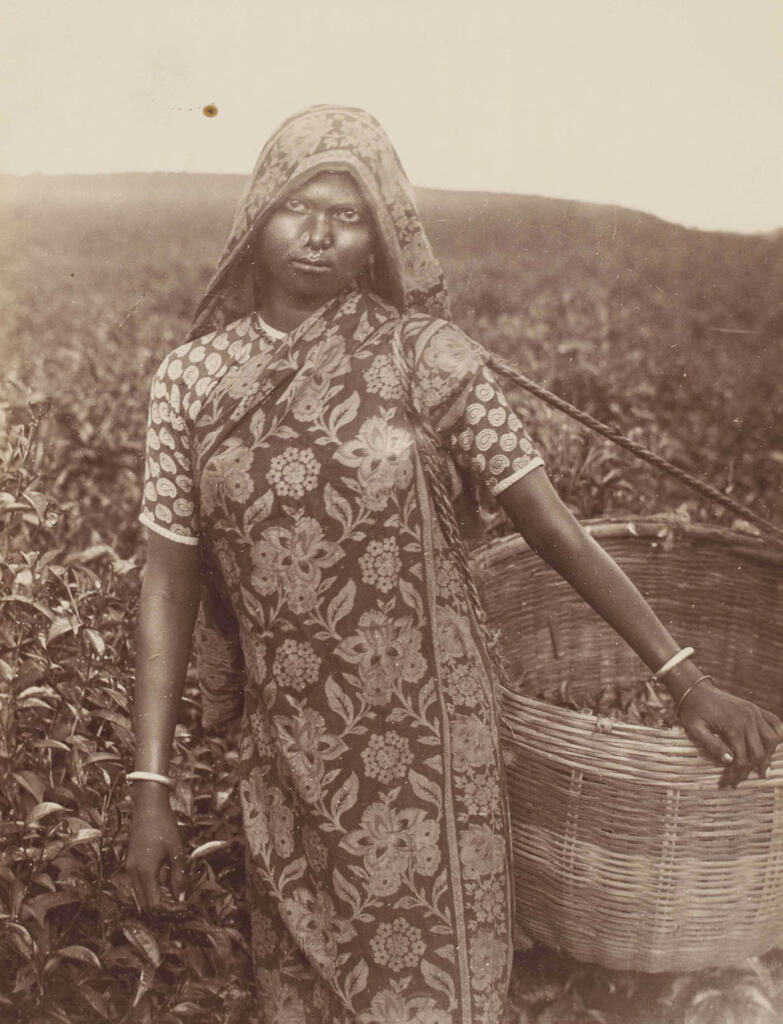 Brewing a Revolution - The Tea Gardens of Bengal - Bengal, Bengal Presidency, Tea