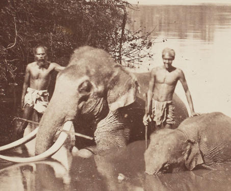 Ceylan (Ceylon) - 19th Century Photography